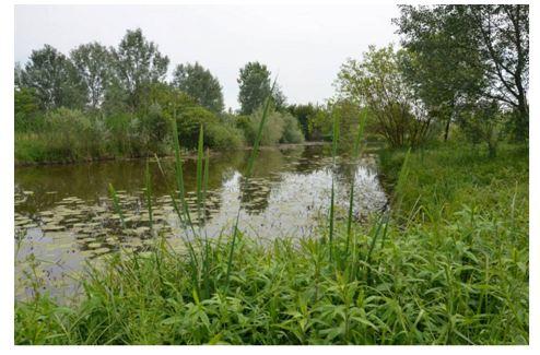 Parco Oglio Sud. Rinasce l'oasi ecologica dopo il rogo doloso