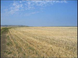steppa coltivata lungo il fiume Don