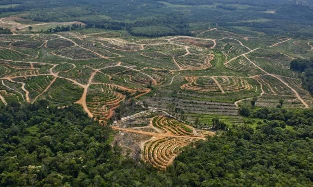 L'Oréal, stop alla deforestazione. P&G nel mirino di Greenpeace