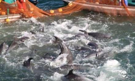 Mattanza dei delfini. Anche l'Italia punta il dito contro il Giappone