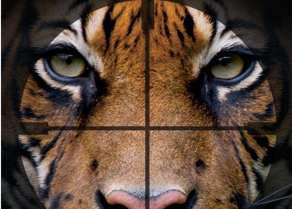Salviamo la tigre. Campagna WWF