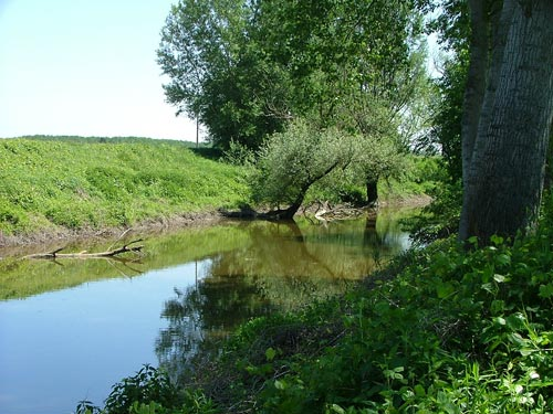 """""""Parma Morta"""": il bacino fluviale diventato Riserva Naturale"""