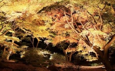 alberi lampioni