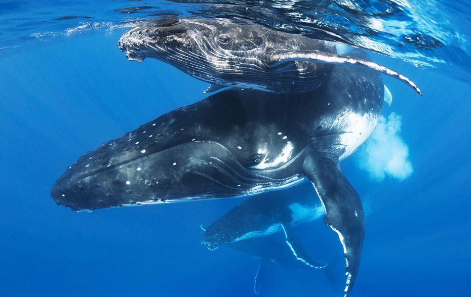 Il canto delle balene