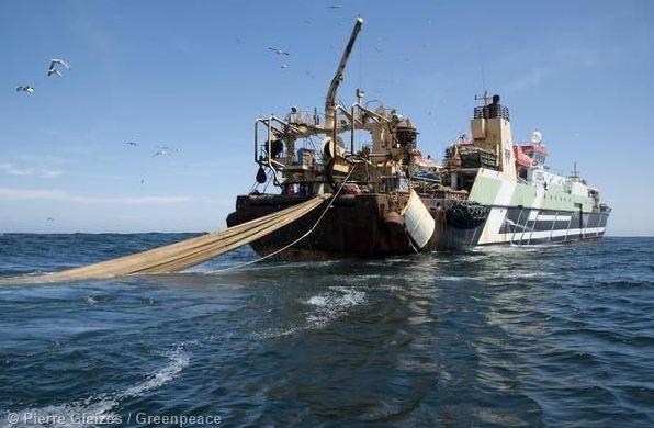 Denuncia di Greenpeace. I mega pescherecci saccheggiano gli oceani