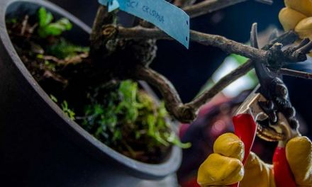 I segreti della cura e potatura delle rose. Domenica 22 Febbraio tra i giardini di Castello Quistini (BS)