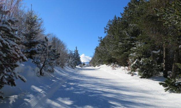 Dopo una nevicata eccezionale crauti alla parmigiana con cotechino