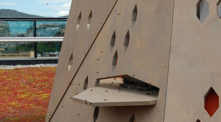 Oslo crea prima 'autostrada' del mondo per proteggere le api a rischio estinzione