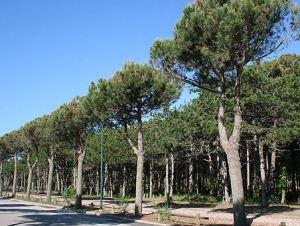 pineta Lignano