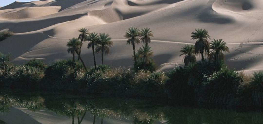 oasi del deserto