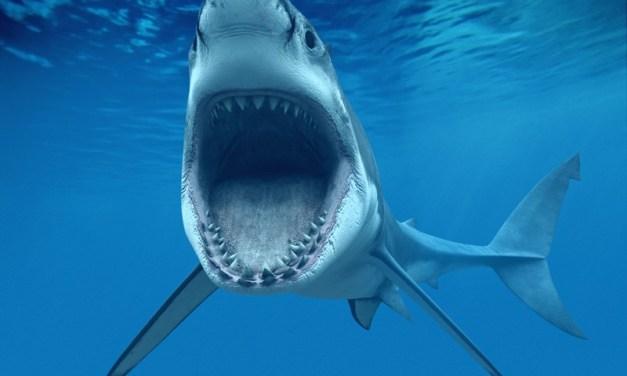 In Australia gli squali si combattono con i droni