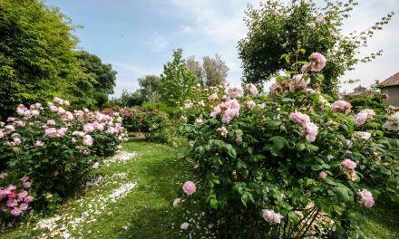 I segreti della coltivazione delle rose, il 31 gennaio  a Castello Quistini (BS)