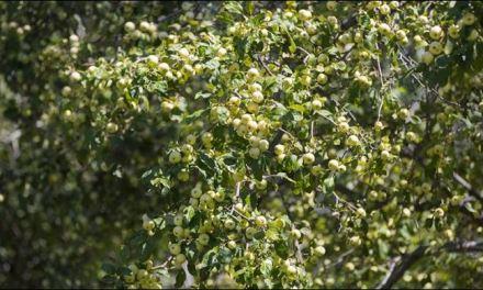 La foresta di meli più antica del mondo è il giardino simbolo del 2016. Il Premio Carlo Scarpa 2016 in Kazakistan