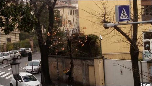 Salve le piante di cachi delle strade di Parma. Il Comune ci ripensa e fa festa