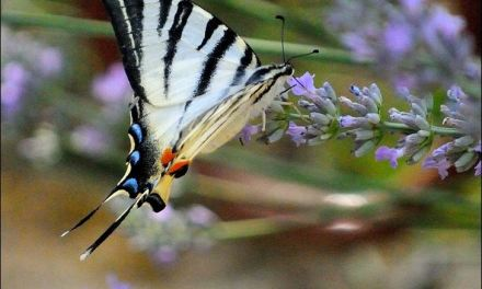 Il giardino delle libellule e farfalle..a San Colombano al Lambro