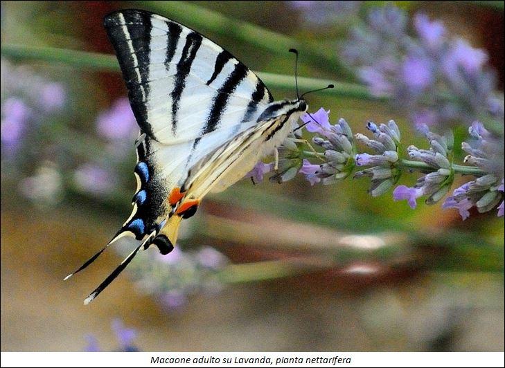 giardino-libellule-4