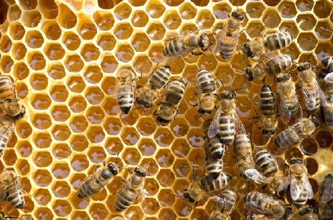 Apicoltura Molinari: la passione per il miele.