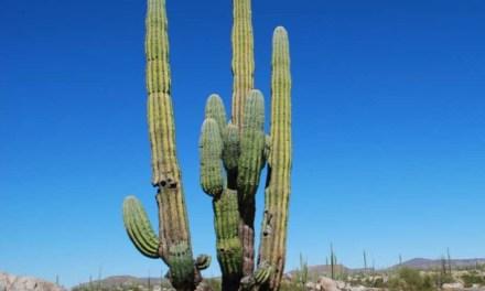 Una cisterna di cactus