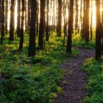 Tre megafoni nella foresta estone per ascoltare i rumori della natura