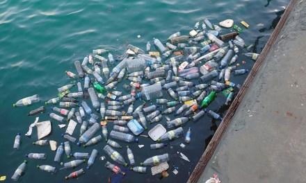 Dalla scoperta della Pacific Garbage Patch ai DPI: perché la plastica nei mari è ancora un problema