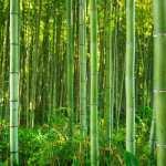 A ottobre una mostra per scoprire i segreti del bambù al Labirinto del MasonE