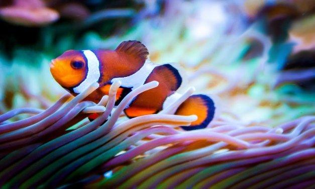 """""""Effetto Nemo"""": quando due pesci animati mettono in pericolo il mare… o forse no?"""