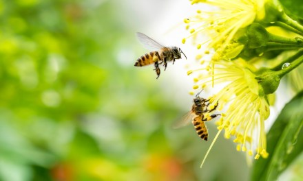 LA TECNOLOGIA SI FA GREEN: 3BEE, UNA START UP A MISURA D'APE