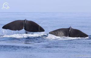 Scorcio del Santuario dei Cetacei @ Liguria, su facebook