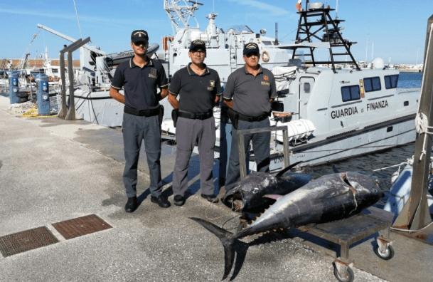 Il grande affare (sporco) del tonno rosso