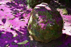 Brownsberg flora