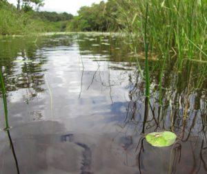 Coesewijne rivier Suriname