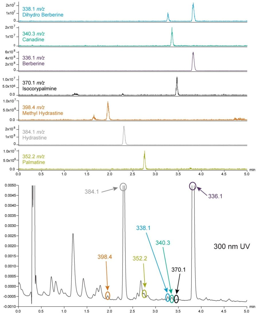 By adding mass detection with the ACQUITY QDa Detector to an existing Alliance HPLC System with UV detection, the peaks of interest in this Golden Seal sample can be easily identified by the m/z values.