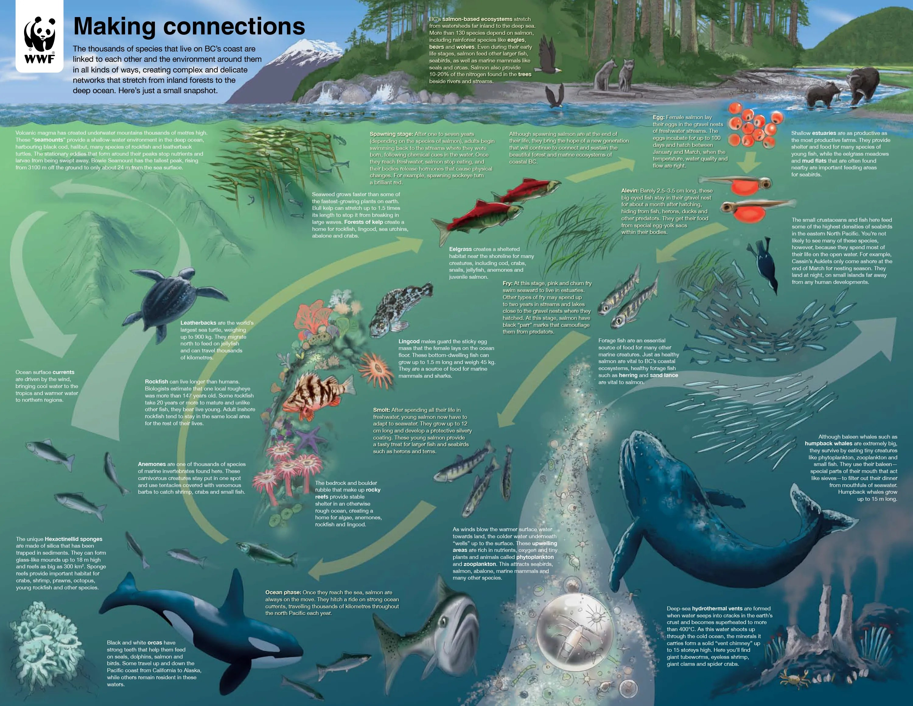 leatherback sea turtle food web diagram 11 pin timer relay wiring bc marine life cycle watershed moment