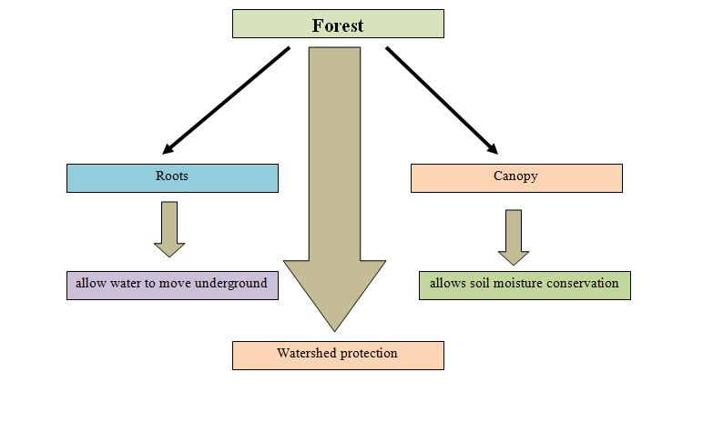 significance of watershed
