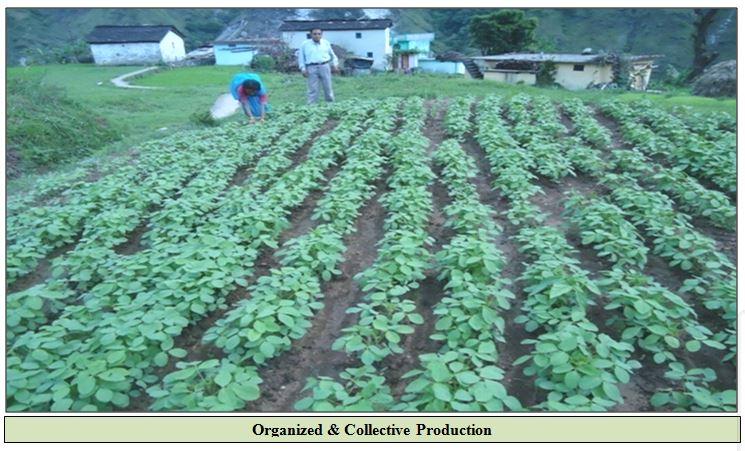 organized production