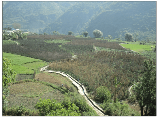 Bird eye view of Staking in tomato field in a watershed