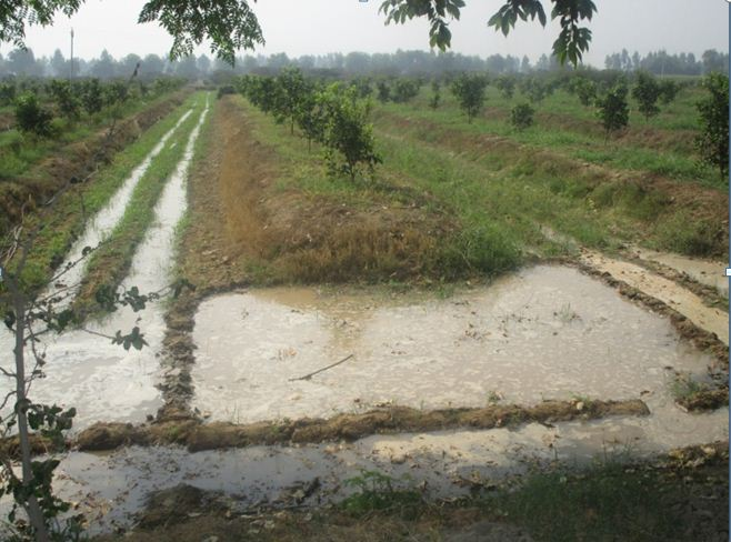 Flood system vs Drip system of Irrigation