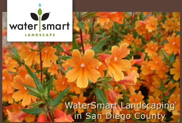 water smart landscaping in san