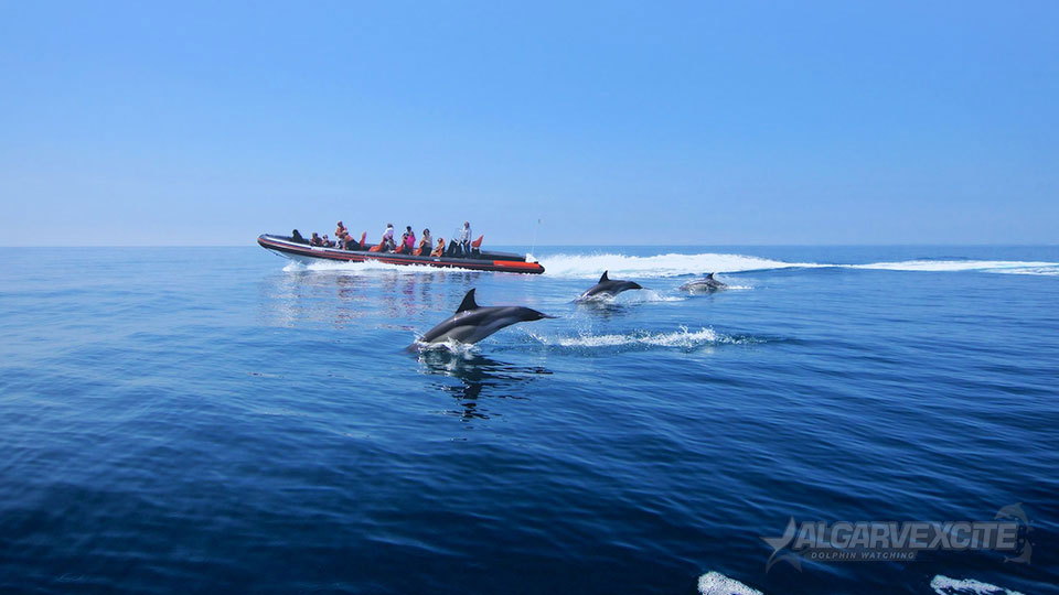 Dolphin Cruises | Watersportsvilamoura.com