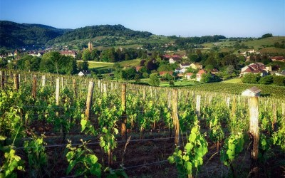 A guide to the Jura's unique wines
