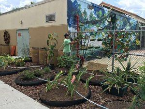 Water Wise Landscape Solution, Beachside Montessori School teaching garden in progress