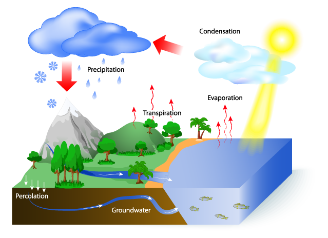 Water Wise Landscape Solutions, Hydrologic Cycle