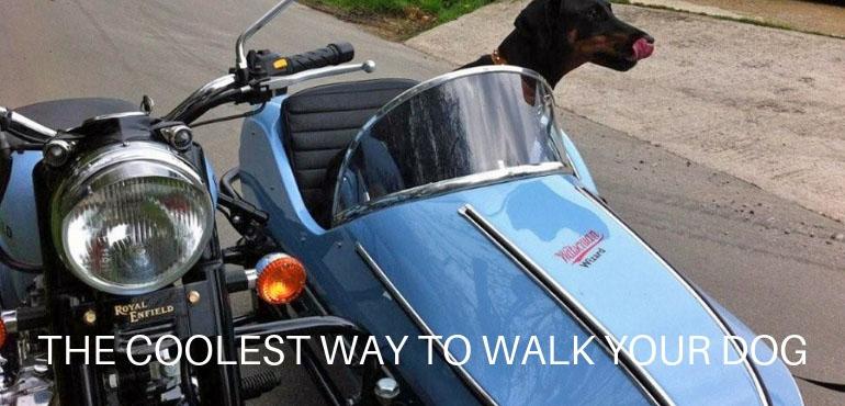 WS Slider Doggy