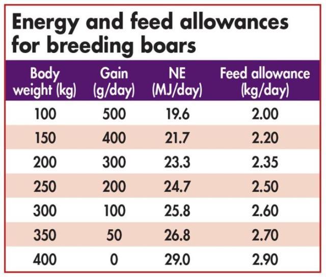 Nutrition guidelines for feeding breeding boars | WATTAgNet