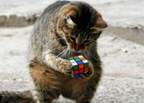 Cat-With-Rubiks-Cube