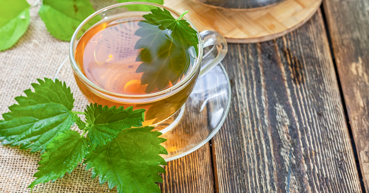 5 Amazing Things You Did Not Know About Stinging Nettle Plant
