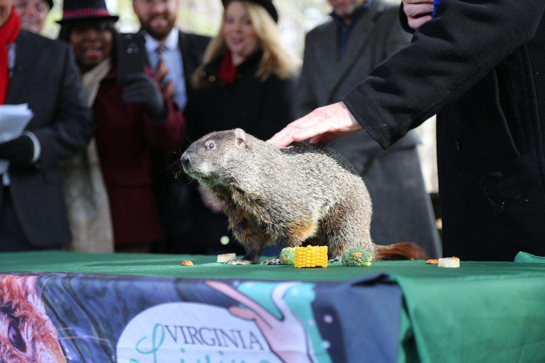 groundhog_689052