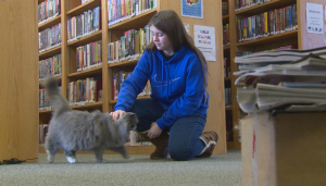 library-cat-4_701754