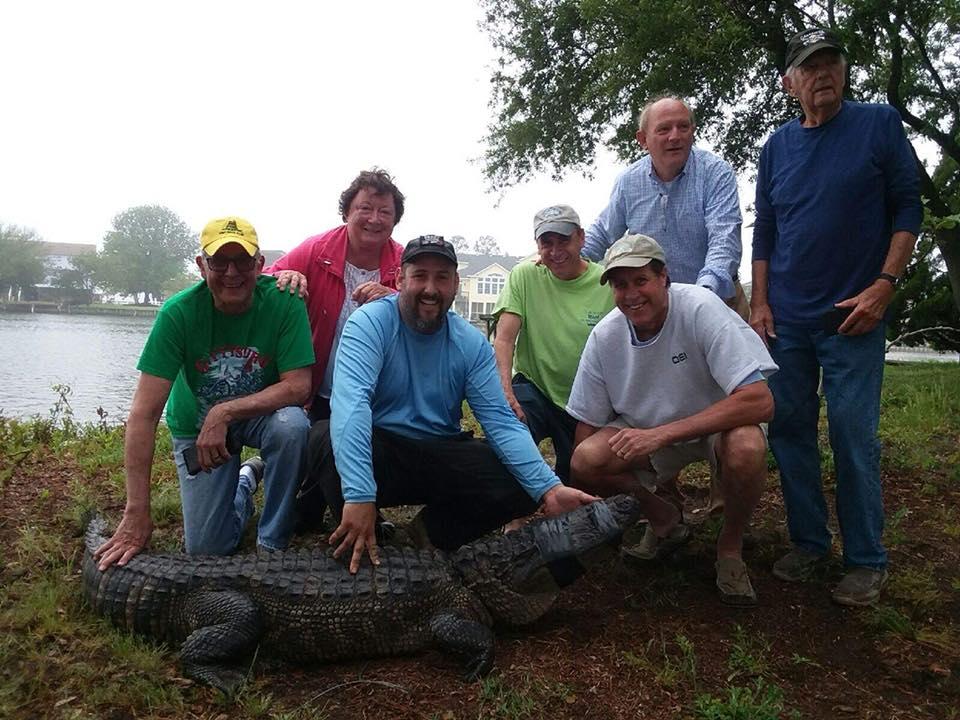 Coastal NC Alligator Research