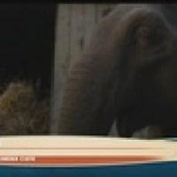 Movie_Review__Dumbo_9_80135081_ver1.0_160_90_1554132443448.jpg